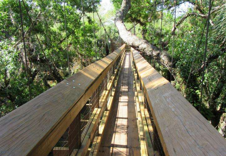A view from the Myakka Canopy Walkway among the tree tops.