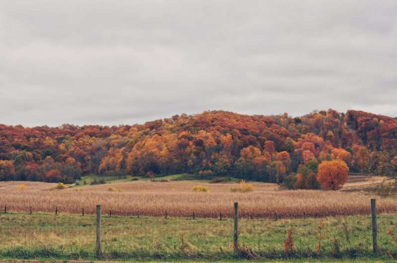 A landscape photo of rural Ohio captures the beauty of the changing tree colors and a golden field of crops ready for harvest.