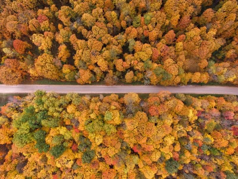 A paved road runs between thick trees in full autumn colors: red, yellow, orange and brown.