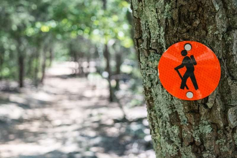 A red trail marker is nailed to a tree on a hiking trail.