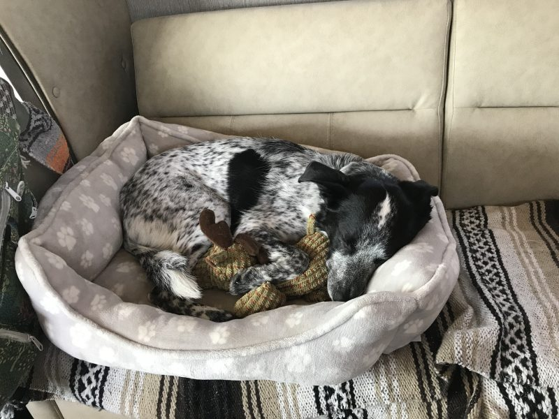 A dog is curled up in her dog bed wiht a reindeer toy in her paws on an RV couch.